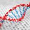Polimorfizmy genetyczne, czyli dlaczego się różnimy